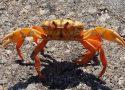 Donde vive el cangrejo
