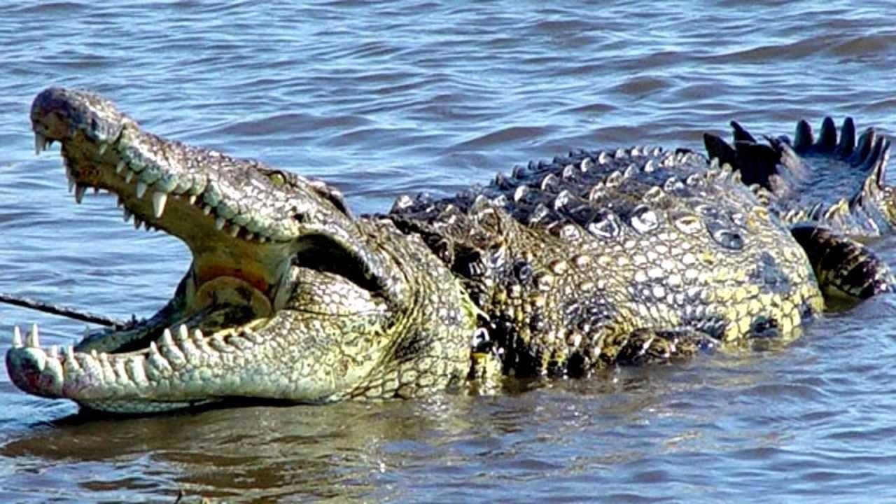Donde vive el cocodrilo