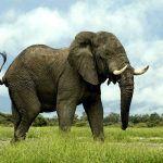 ¿Dónde vive el elefante?