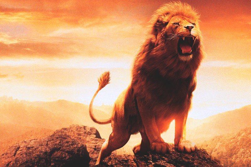¿Dónde vive el león?