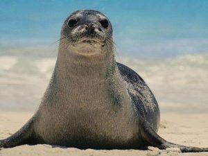 Donde vive la foca