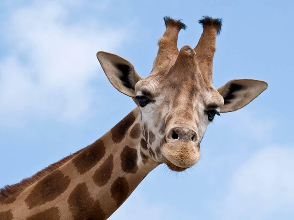 Donde vive la jirafa
