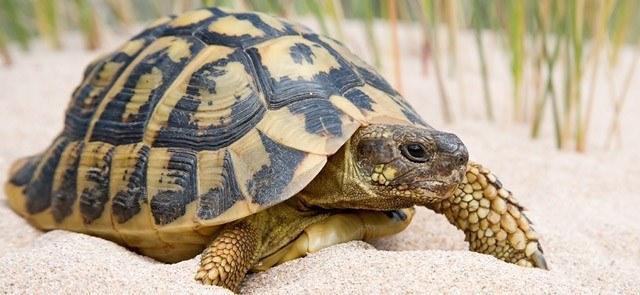 Donde vive la tortuga