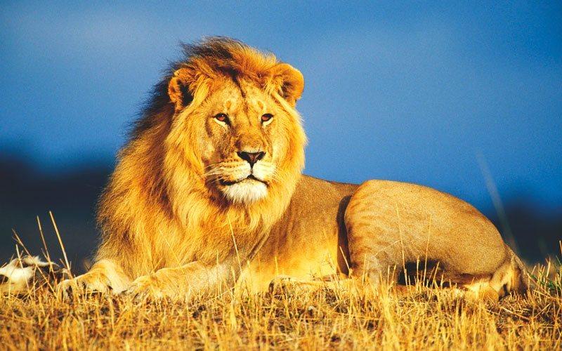 Resultado de imagen de leon