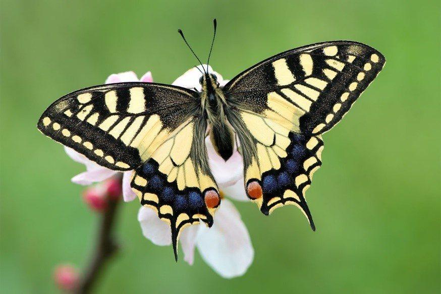 Dónde vive la mariposa
