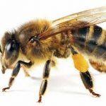 ¿Dónde viven las abejas?