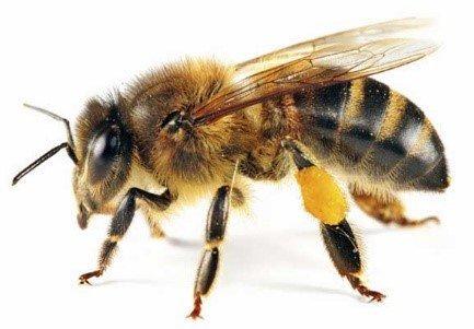 Dónde viven las abejas