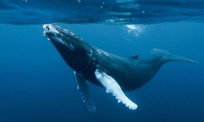 Dónde viven las ballenas