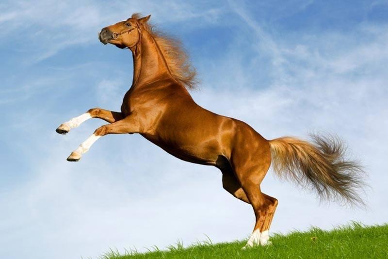 ¿Dónde viven los caballos?
