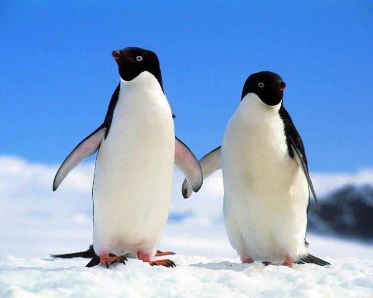 Dónde viven los pingüinos