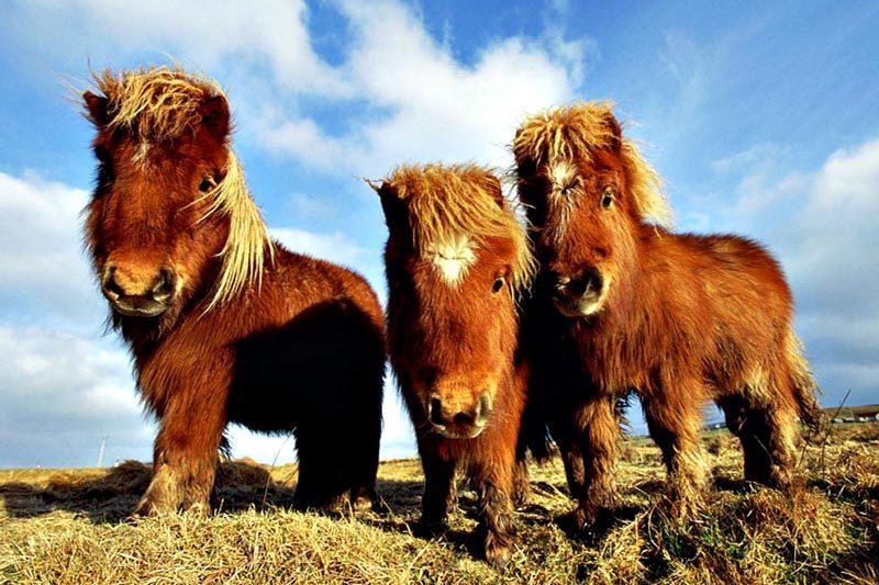 Dónde viven los ponis, caballos para niños