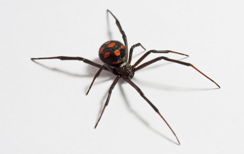 Resultado de imagen para arañas