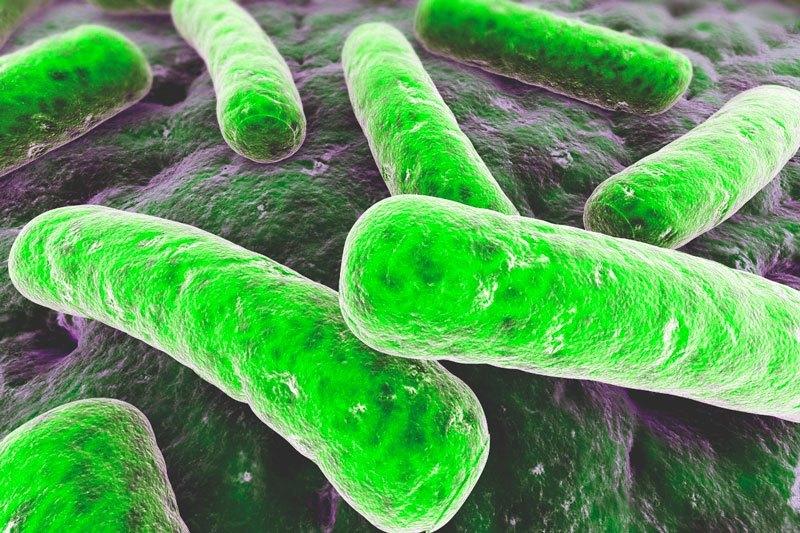 Dónde viven las bacterias
