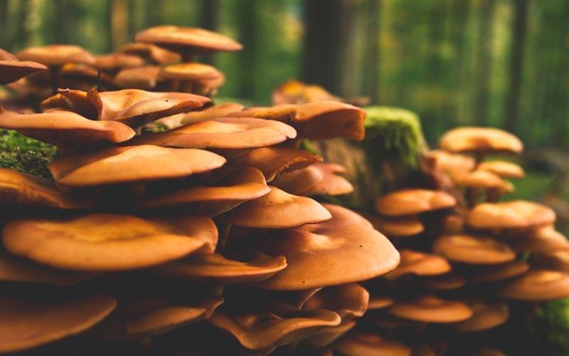 ¿Dónde viven los hongos?