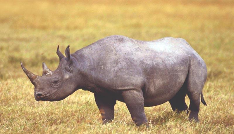 Dónde viven los rinocerontes