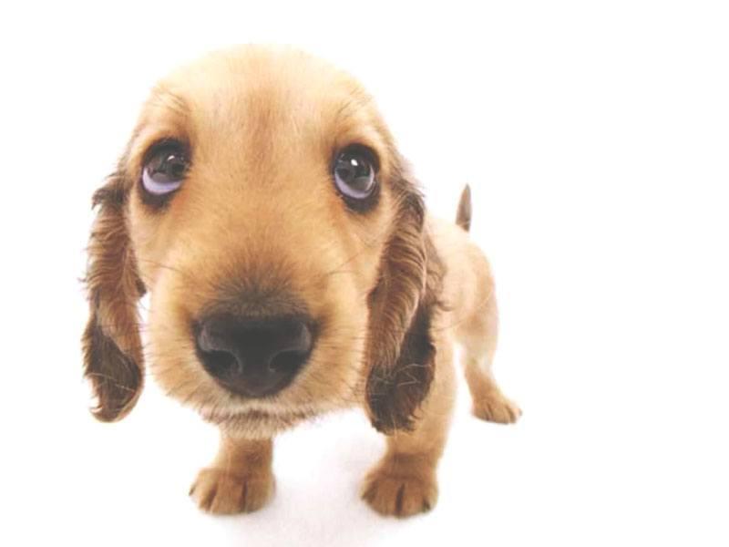 ¿Qué comen los perros?