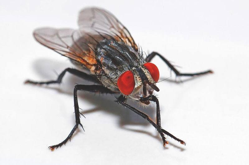 ¿Dónde viven las moscas?