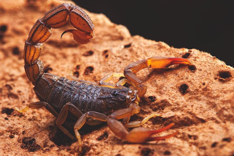 ¿Dónde vive el escorpión?