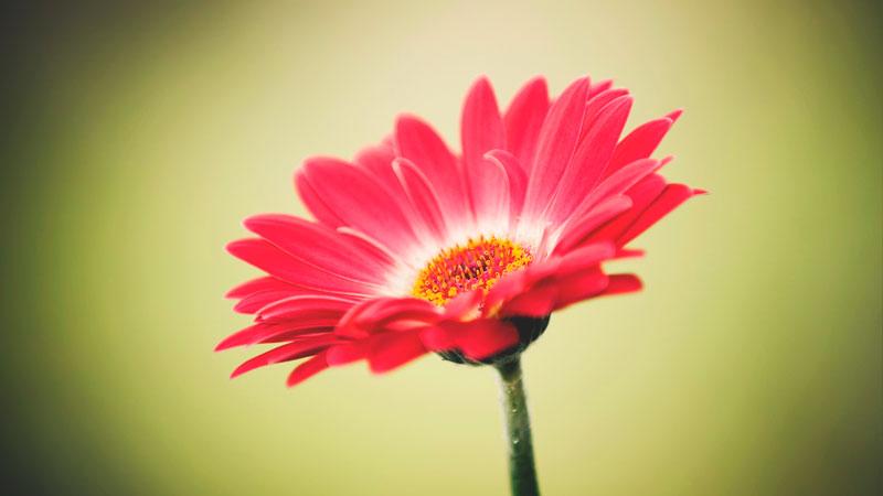 Dónde crecen las flores y plantas?