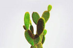 ¿Donde vive el cactus?