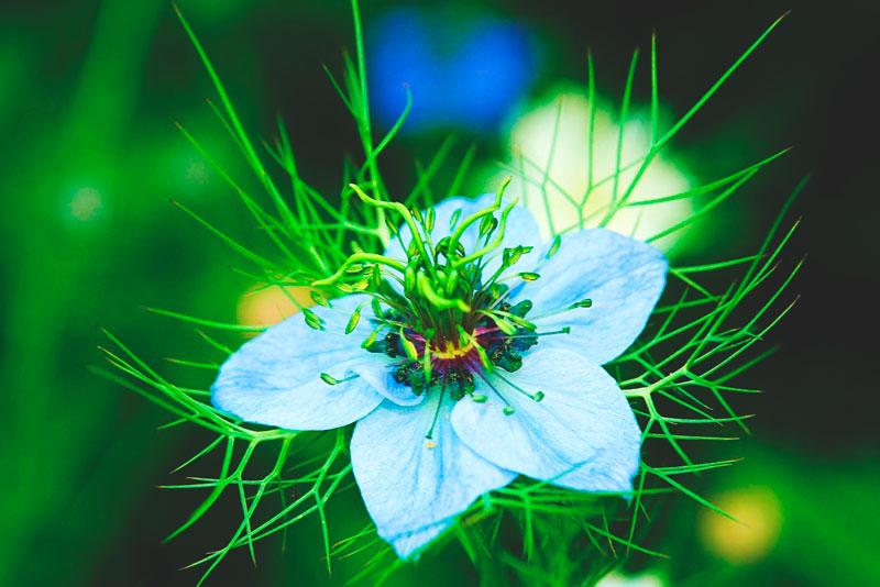 ¿Donde vive la flor de la pasión?
