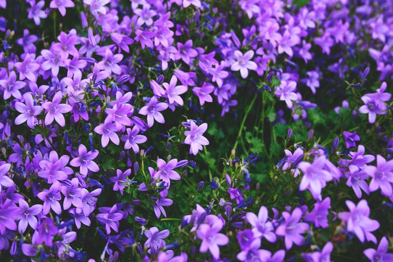 ¿Donde vive la lila?
