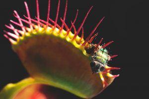 ¿Donde vive la planta carnivora?