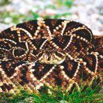 ¿Dónde vive la serpiente terciopelo?