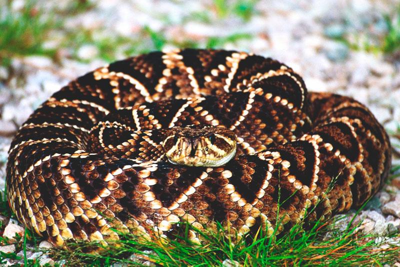 ¿Donde vive la serpiente terciopelo?