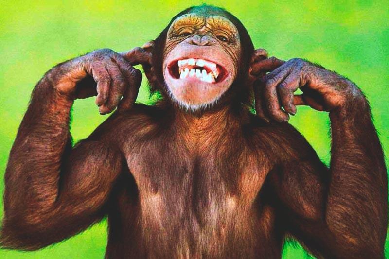 ¿Donde vive el chimpance?