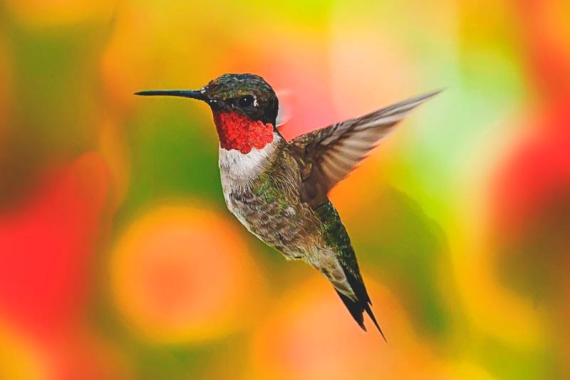 ¿Donde vive el colibri?
