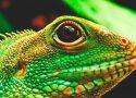 ¿Dónde viven los lagartos?