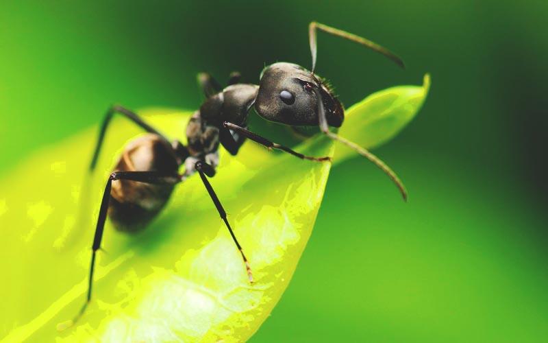 D nde viven los insectos - Insectos en casa fotos ...