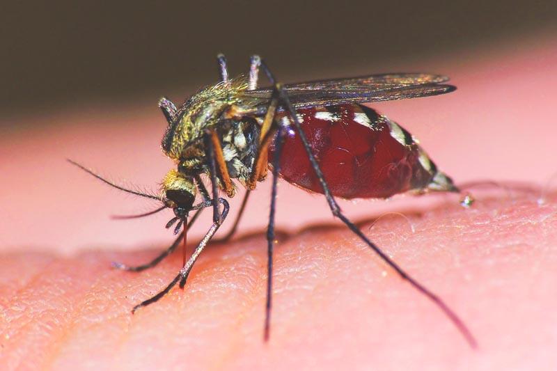 ¿Dónde vive el mosquito?