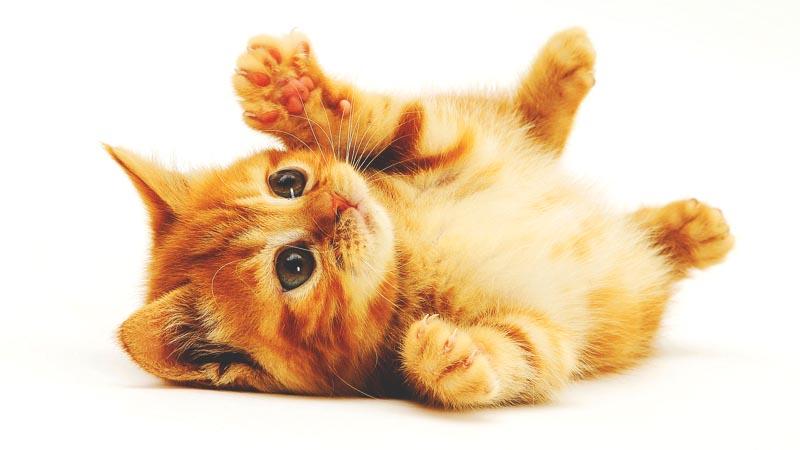 ¿Dónde viven los gatos?