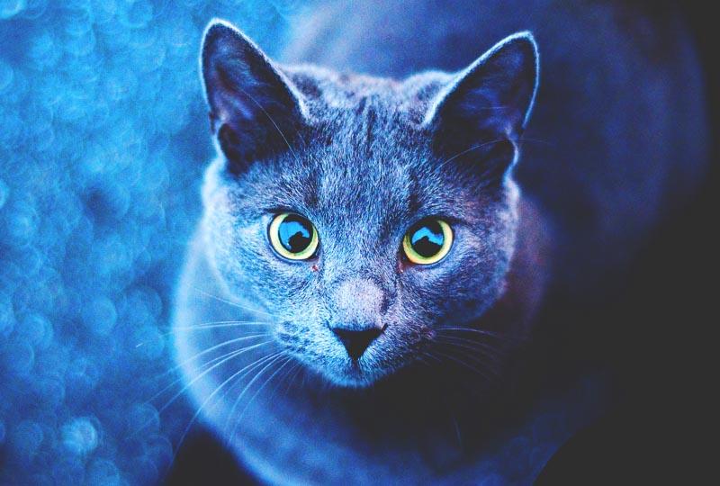 D nde viven los gatos actualizado 2018 - Fotos de casas para gatos ...