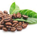 ¿Dónde comprar café verde?