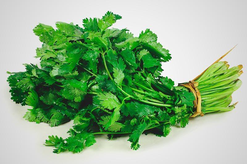 Donde crece el cilantro