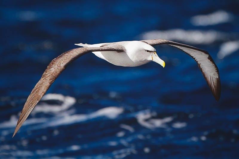 ¿Dónde vive el albatros?