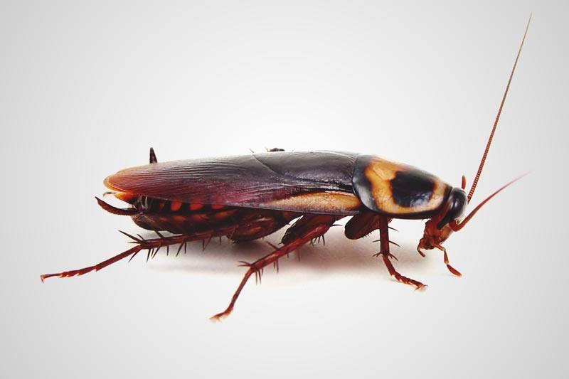 ¿Dónde viven las cucarachas?