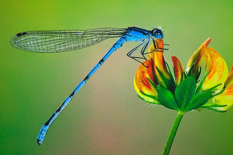 ¿Dónde vive la libélula?