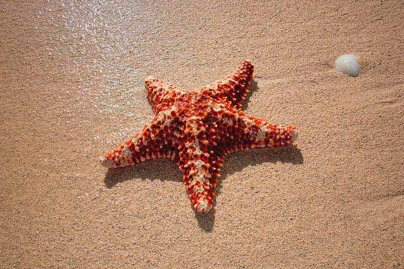 ¿Dónde vive la estrella de mar?